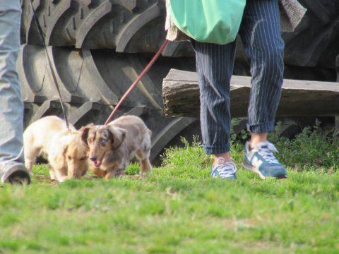愛犬とのお散歩に多機能でキュートなバッグ、付録でいいんじゃない?