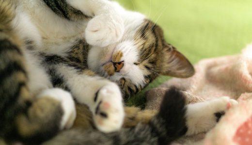 【猫好きに贈る!実用的な猫デザイン付録特集!】買い物エコバッグに使える猫ちゃんトート♪